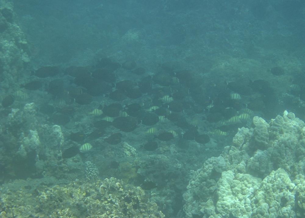 2012 02 Snorkling II-20.jpg
