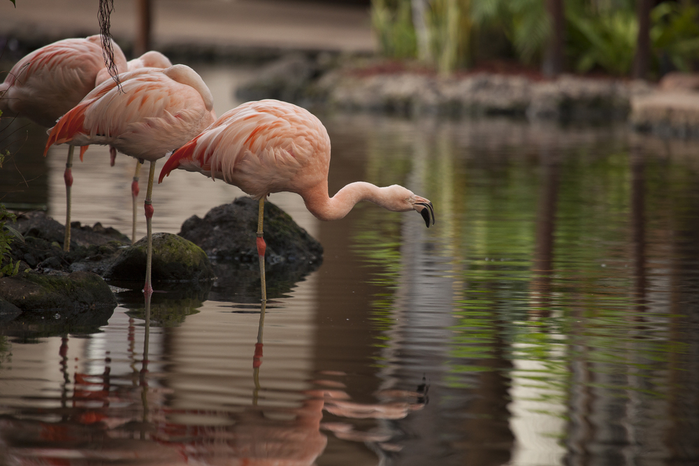 Flamingos inside the hotel.