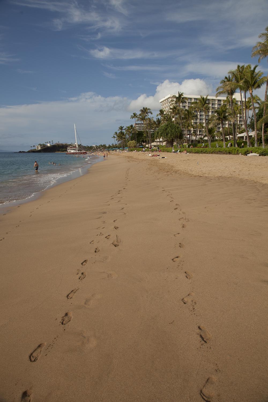 2012 02 Westine Maui-13.jpg