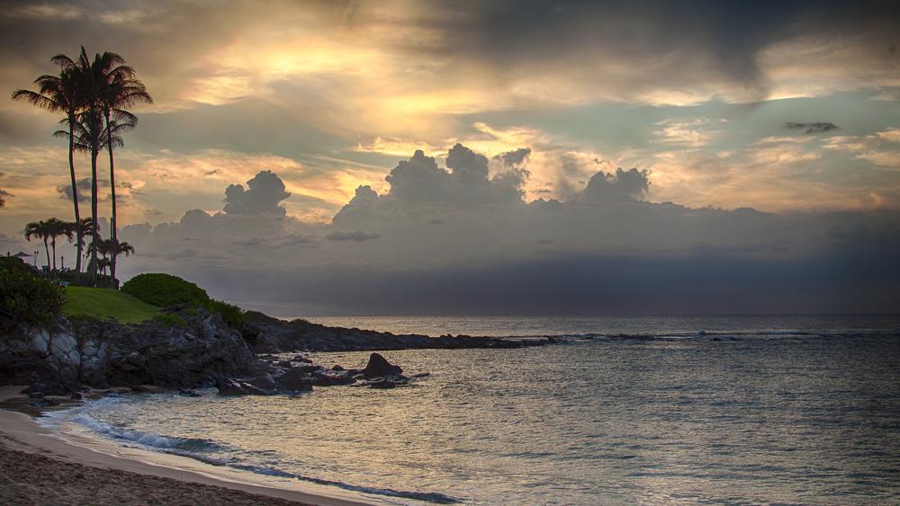 2012 02 Westine Maui-20.jpg
