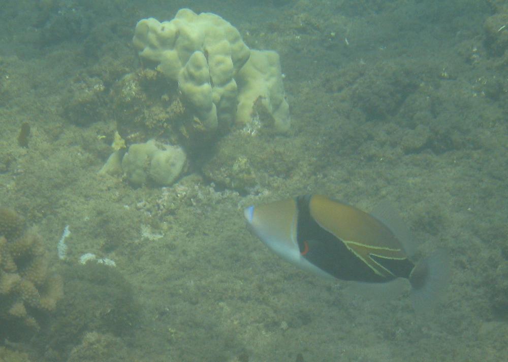 2012 02 Snorkel I-3.jpg