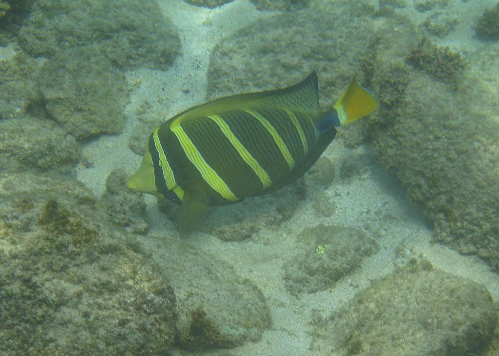 2012 02 Snorkel I-14.jpg