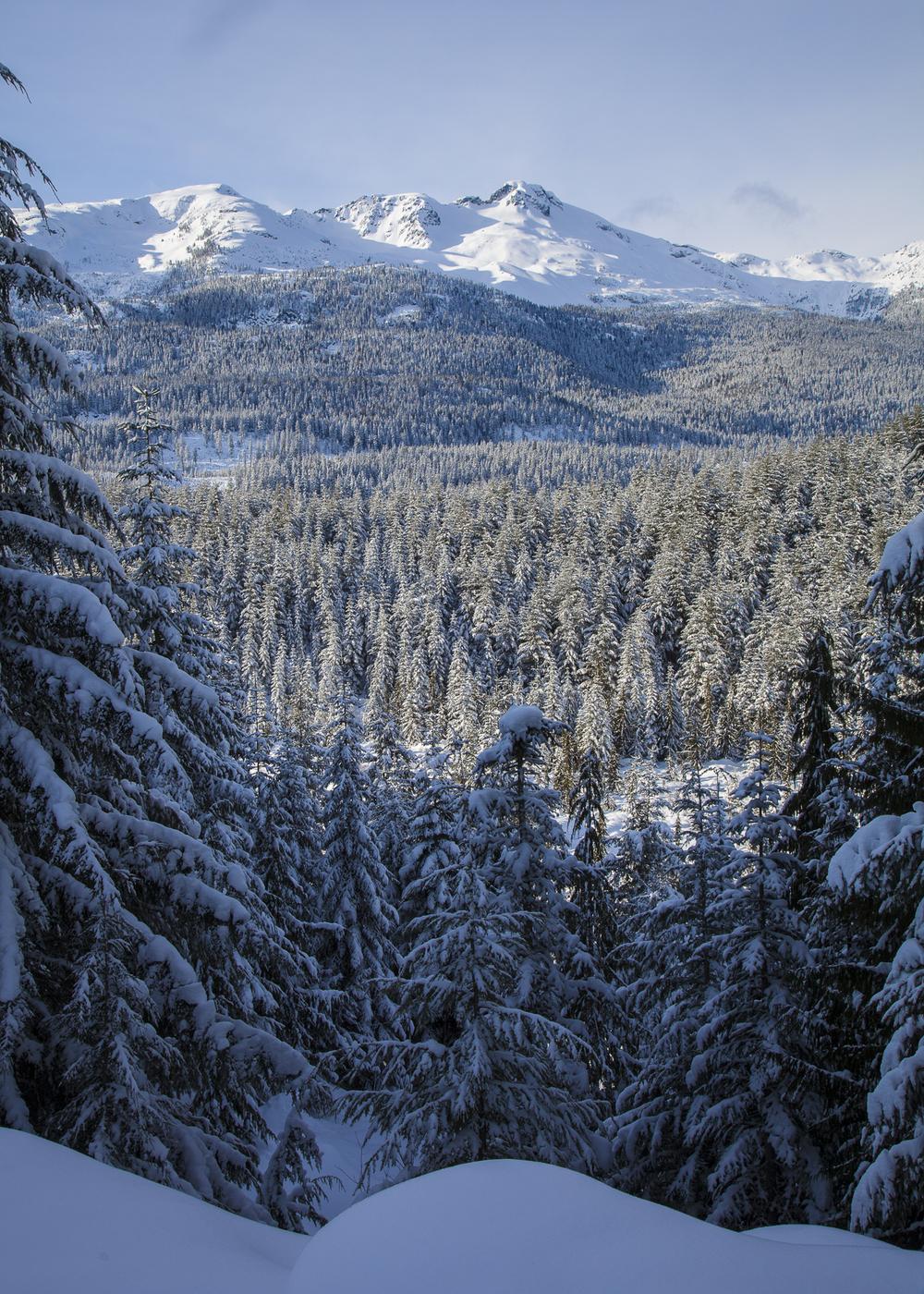 2012 01 Snowshoeing-3.jpg