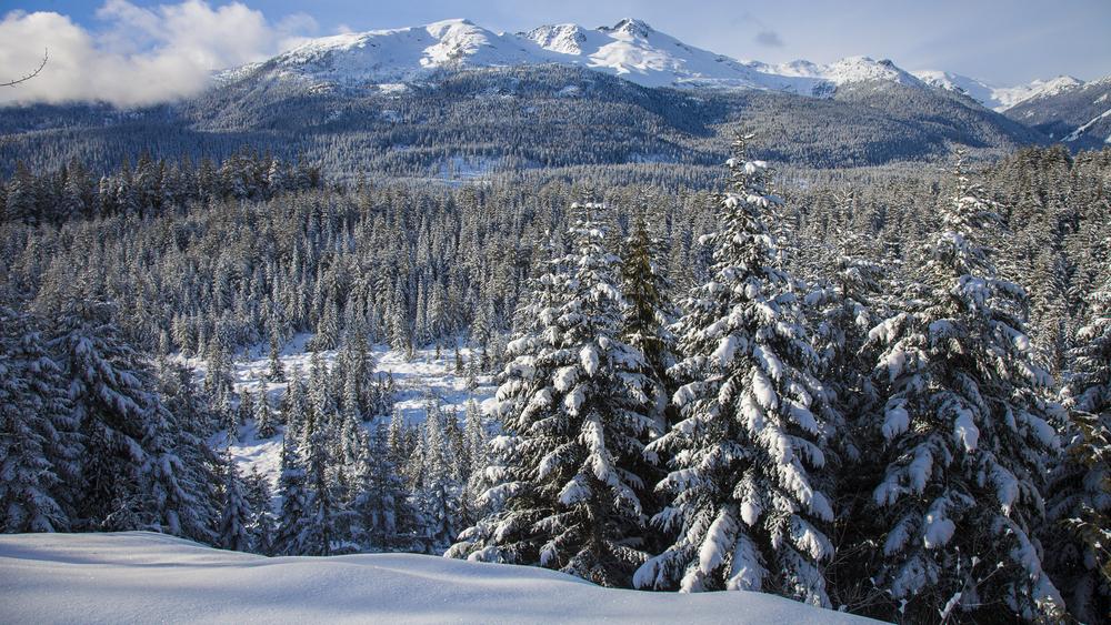 2012 01 Snowshoeing-4.jpg