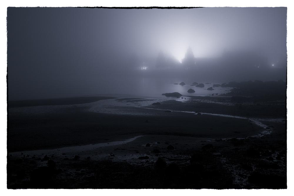 Stanley Park, in the fog