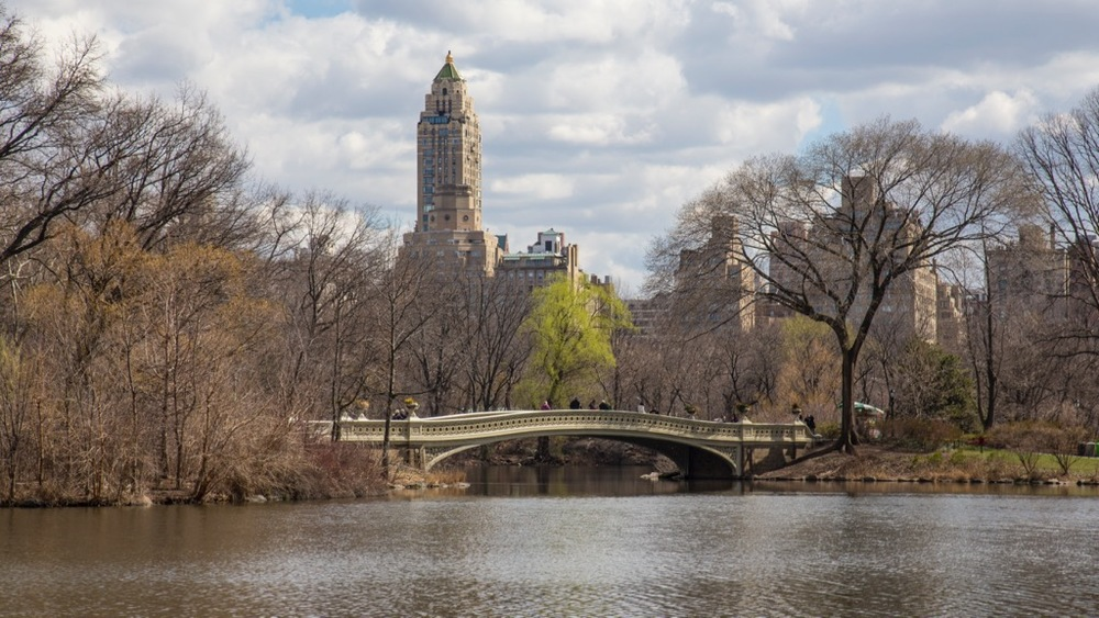 Looking across a lake in Central Park.
