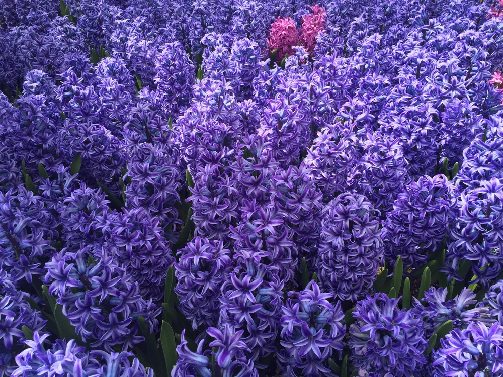 more flowers bellagio