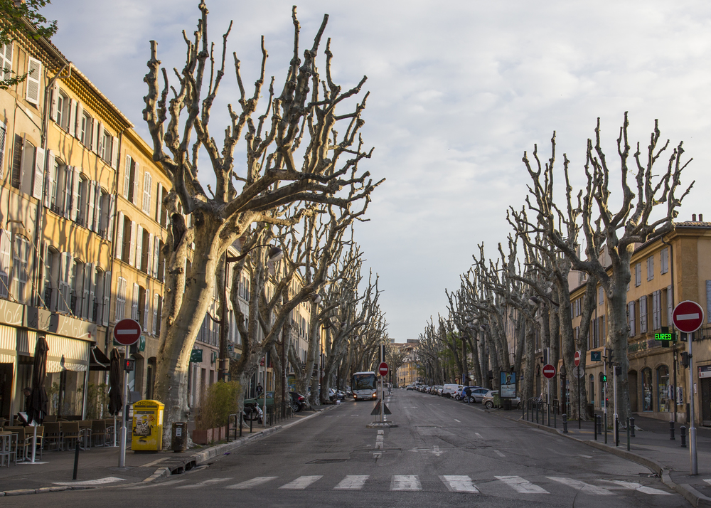 """The huge sycamore trees (known as """"plane trees"""" locally), still were without leaves."""