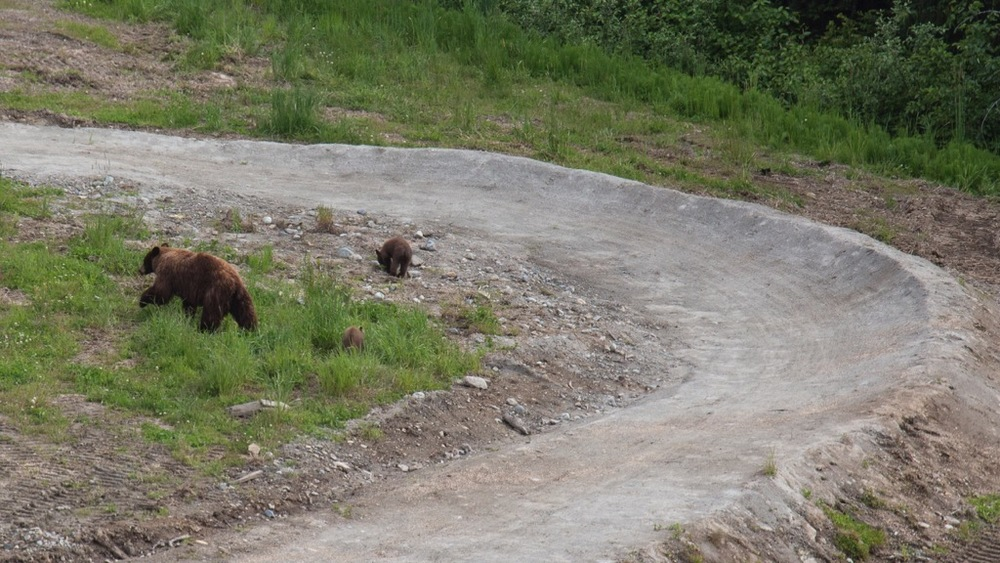 Second view of the bear and her cubs, from the gondola