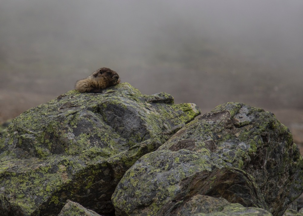 One of the most fun things about this hike, because the trail was pretty quiet and there weren't a lot of people around, there were tons of marmots about.