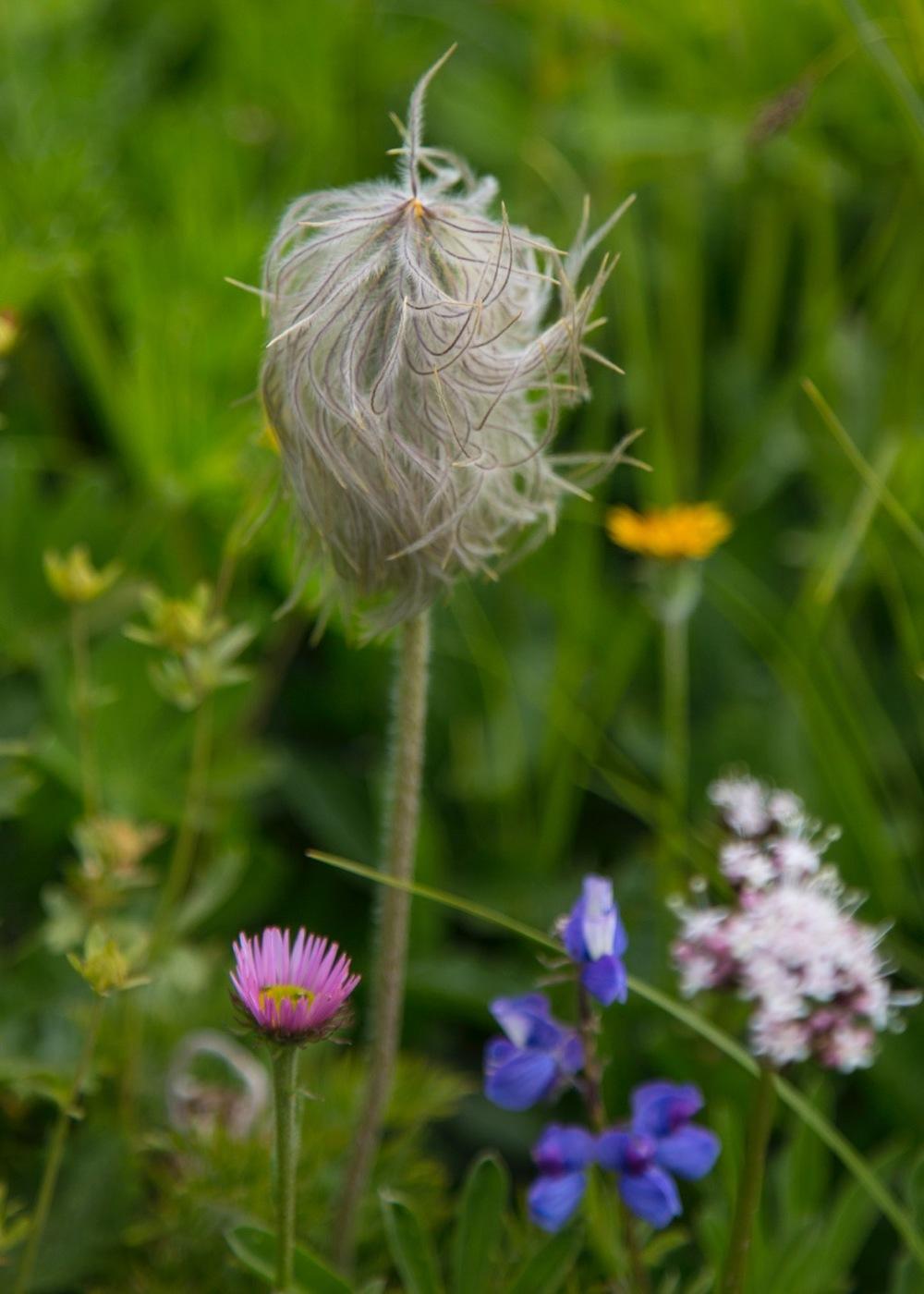 A small floral still life.