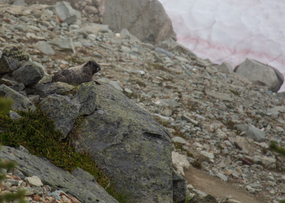 This marmot was sitting right beside the trail. He let us get pretty close, before diving for his hole.