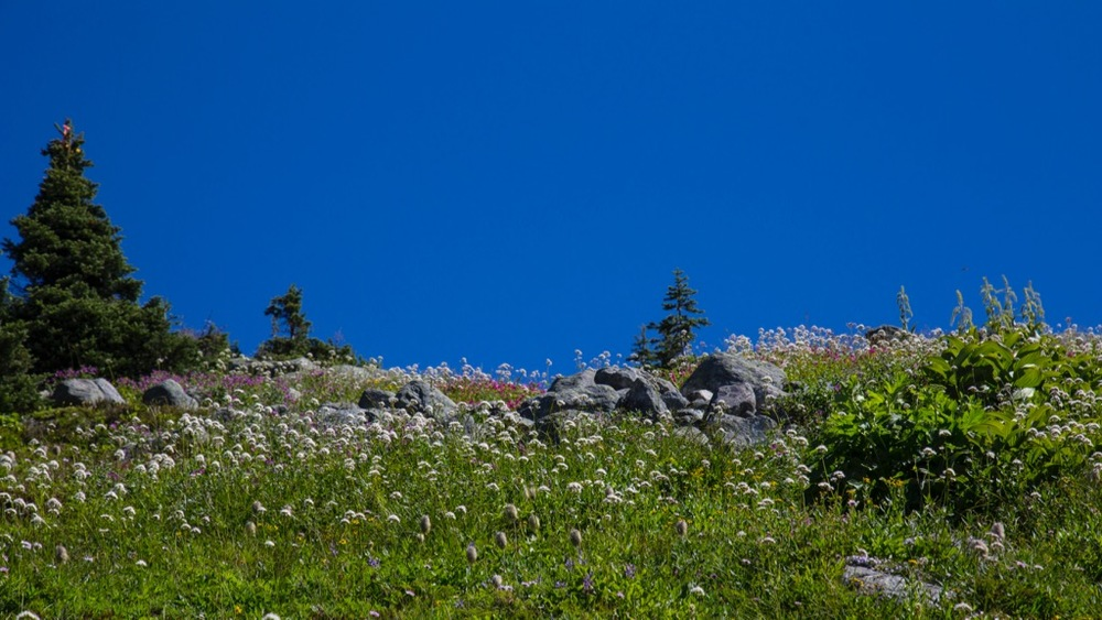 An amazing assortment of wildflowers, framed against a perfect blue sky.