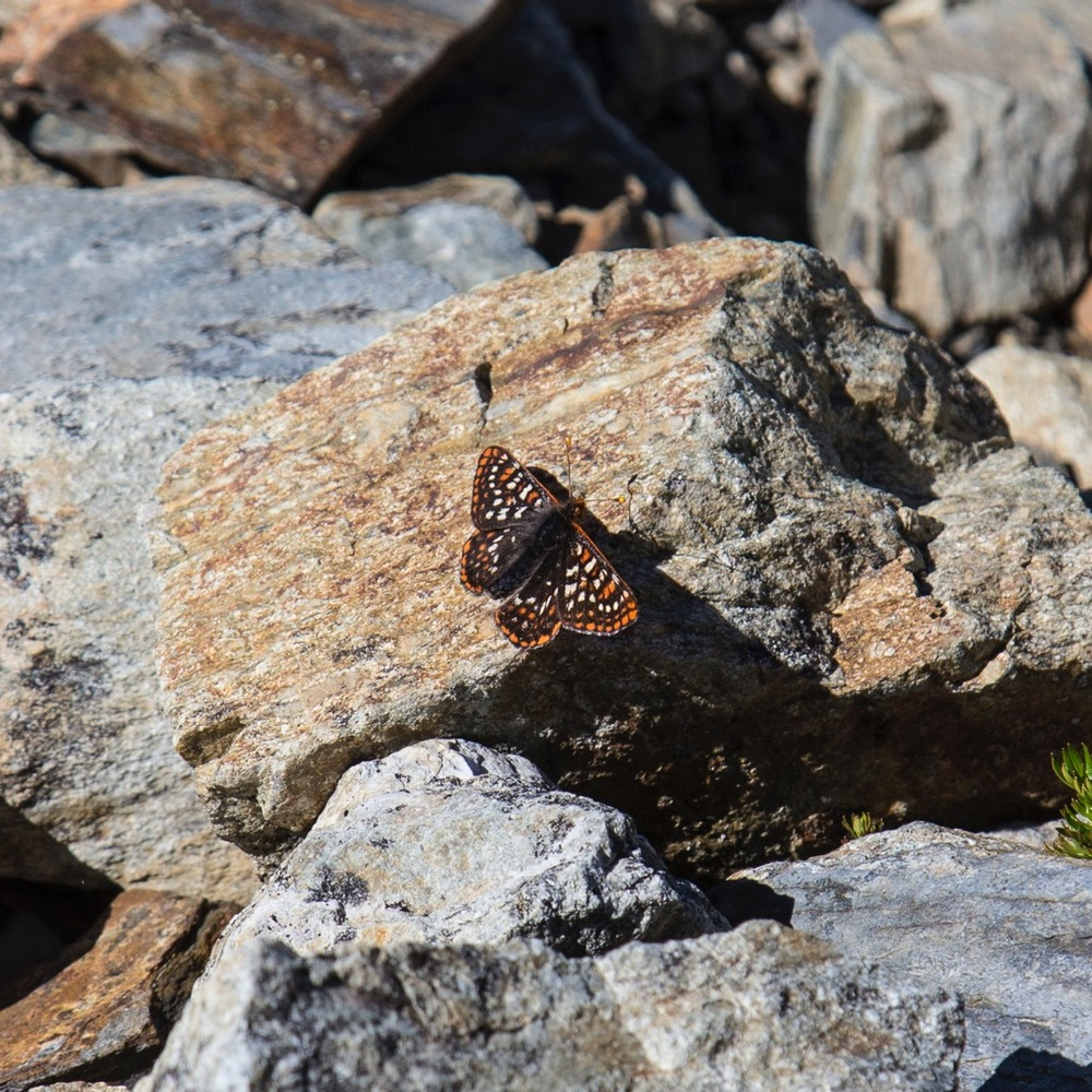 There are a million butterflies out in the sunshine. They never seem to stop, but I did get a picture of one.