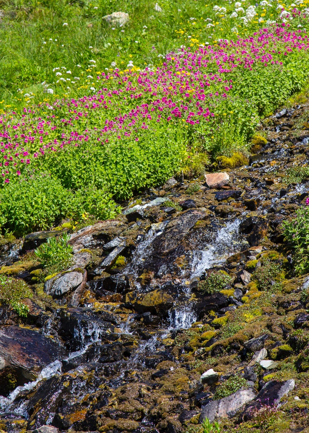 The flowers line the whole stream with a riot of colour.