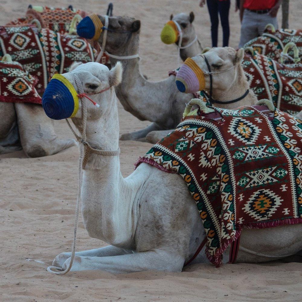 Bur Dubai - 10.jpg