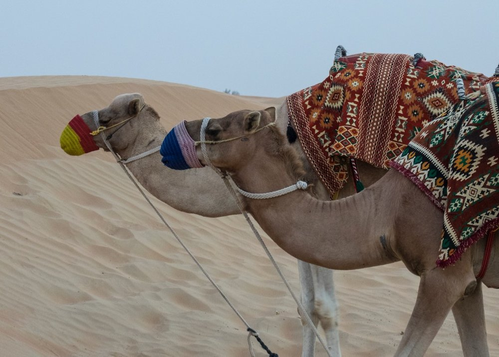 Camel rides were available...