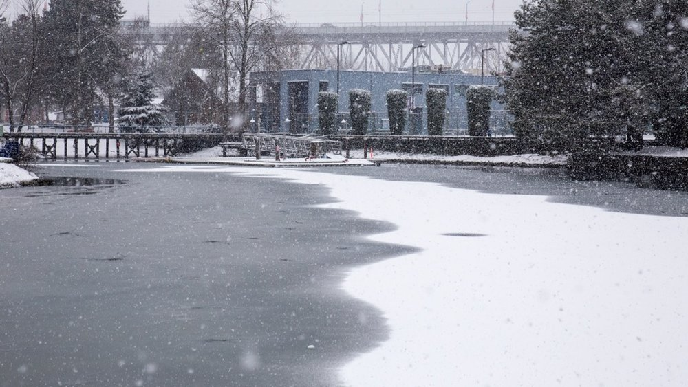 This was the first time I had ever seen ice formed on any part of False Creek. This is sea water, so it was surprising to see it start to freeze over.