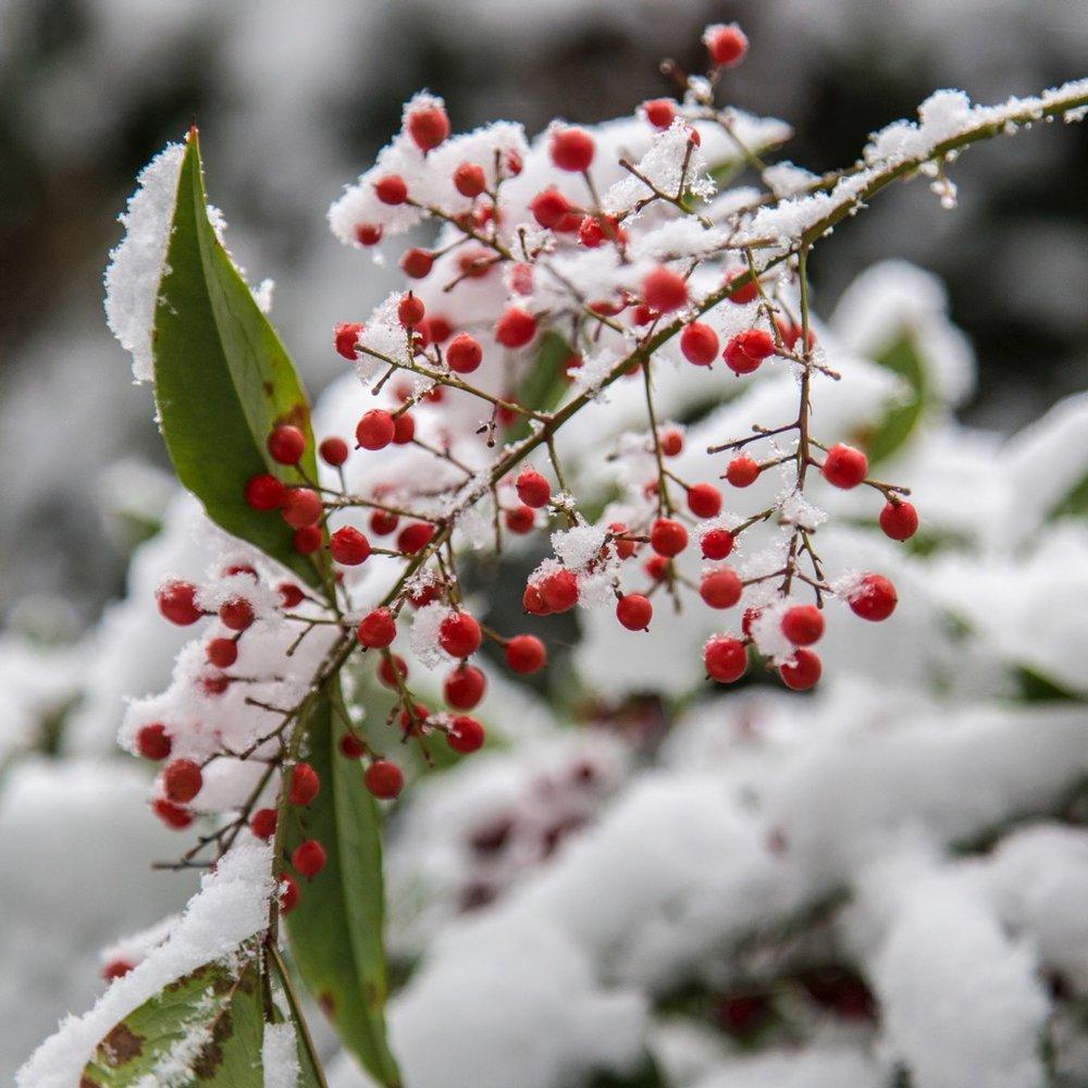 Winter Wonderland - 20.jpg