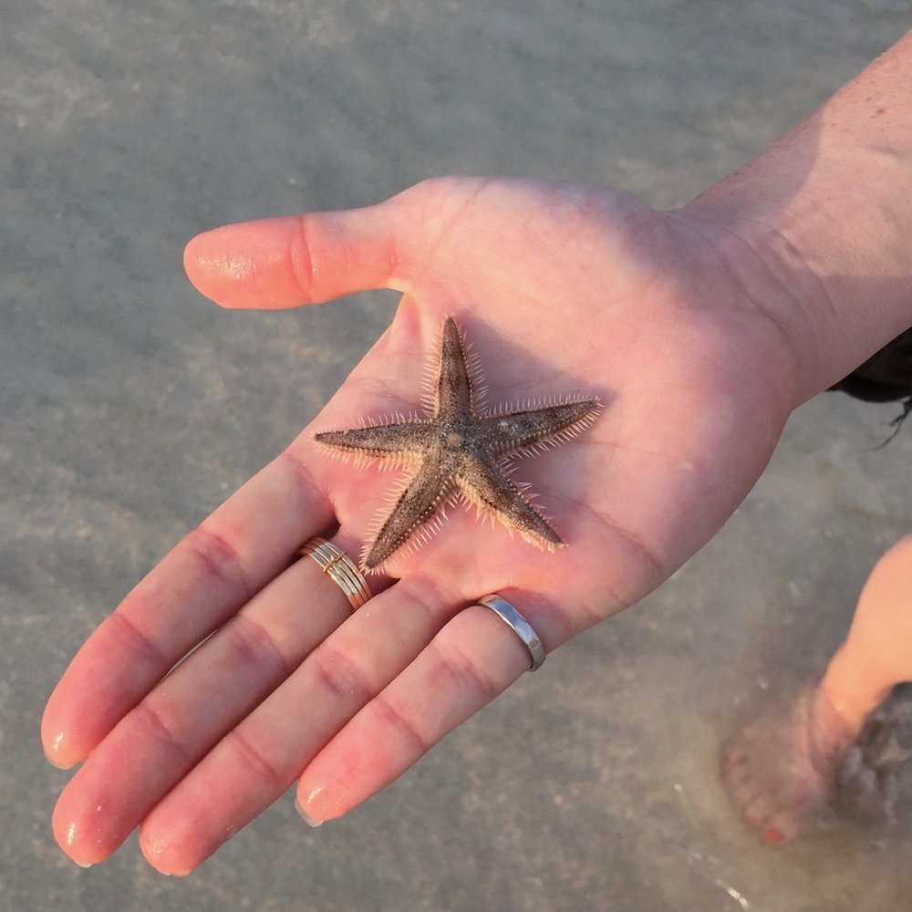Sea star - we put him back.