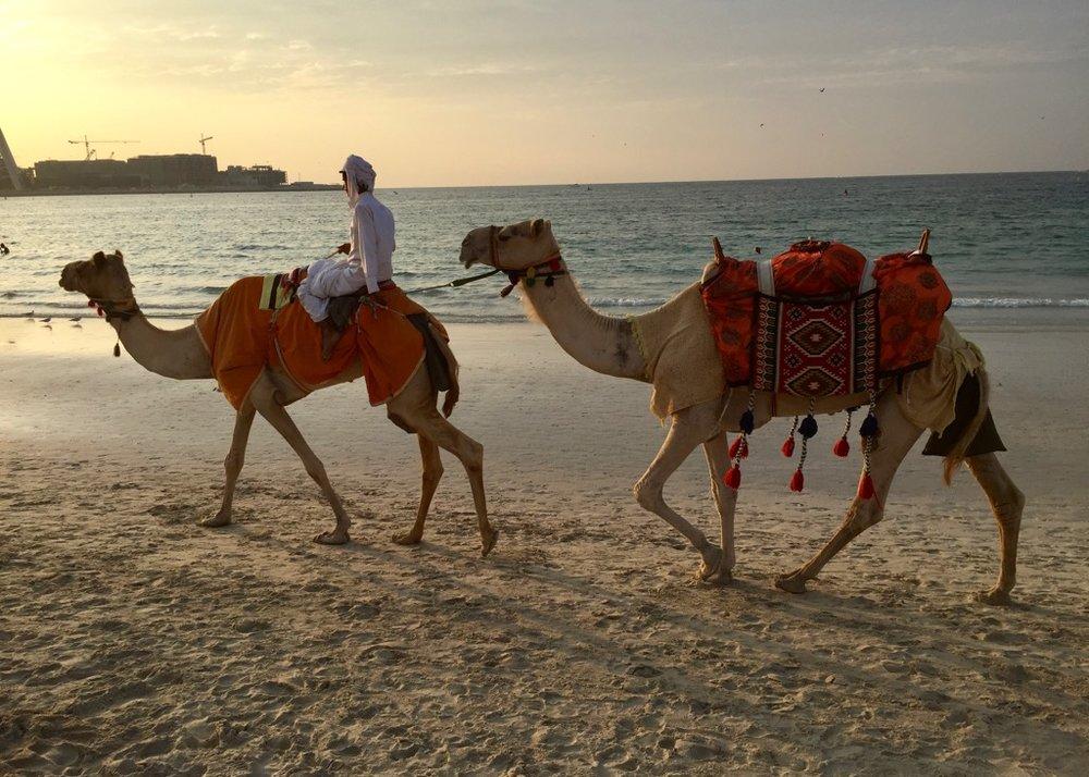 Camels?