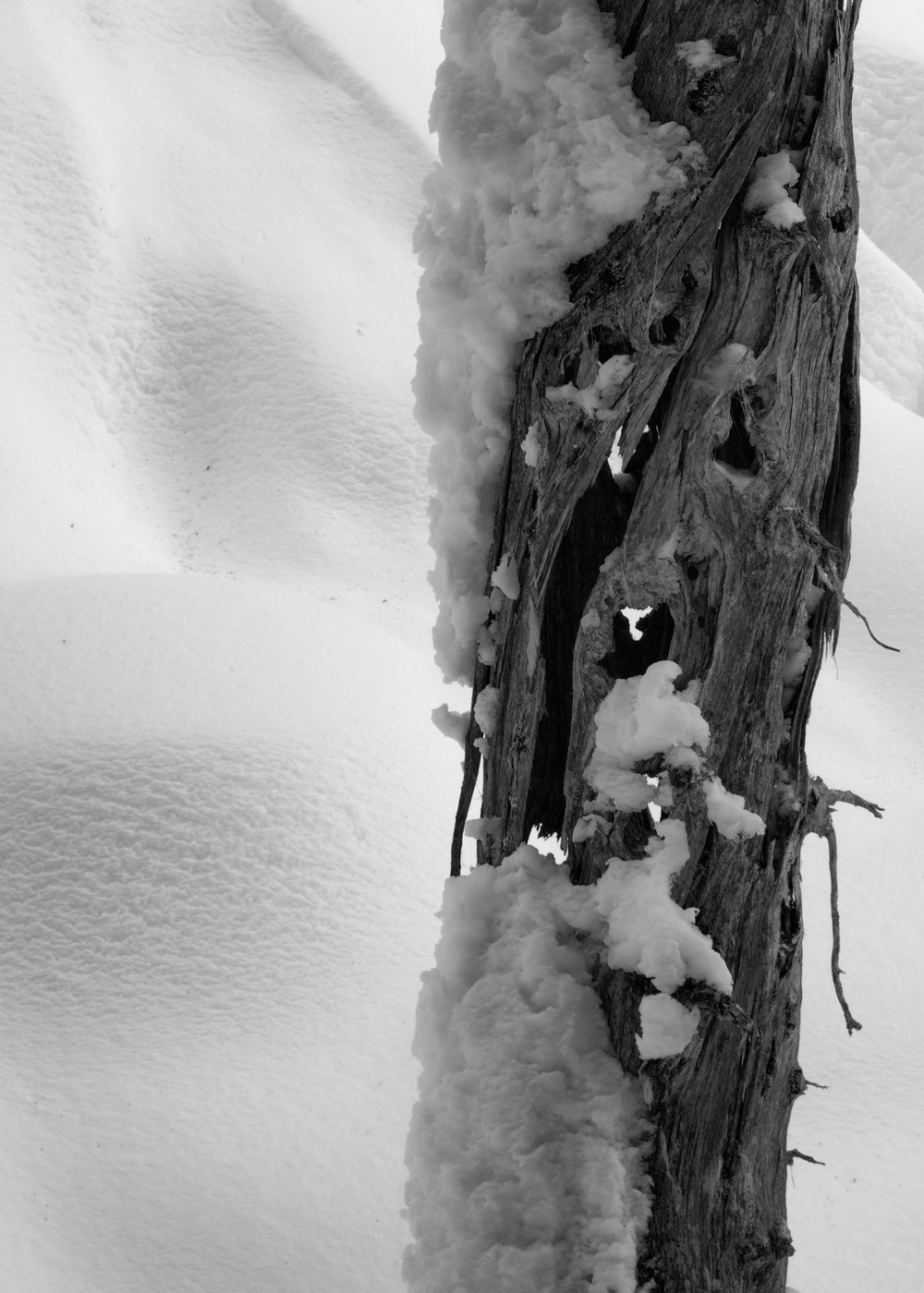 Callaghan Snowshoeing - 41.jpg