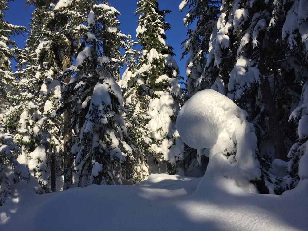 Callaghan Snowshoeing - 14.jpg