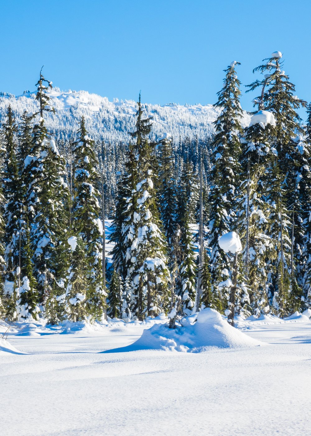 Callaghan Snowshoeing - 17.jpg