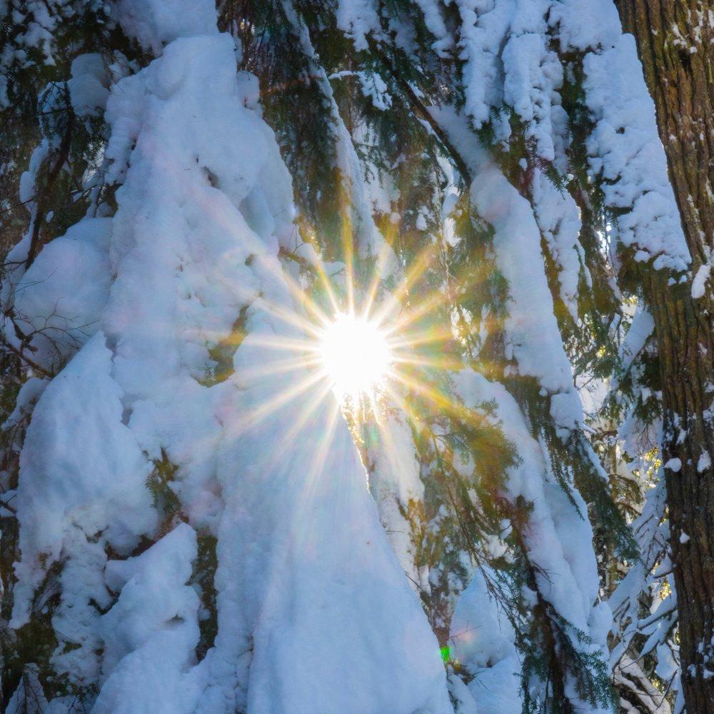 Callaghan Snowshoeing - 21.jpg