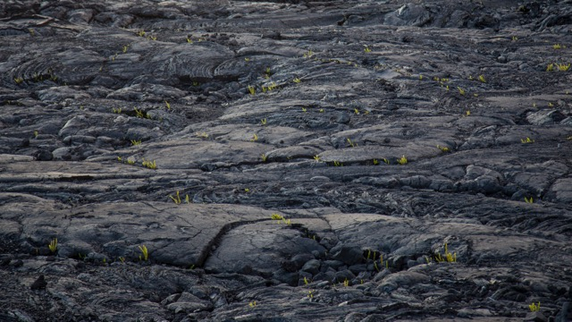 Life starting to take hold on one of the lava fields from a 1970s eruption