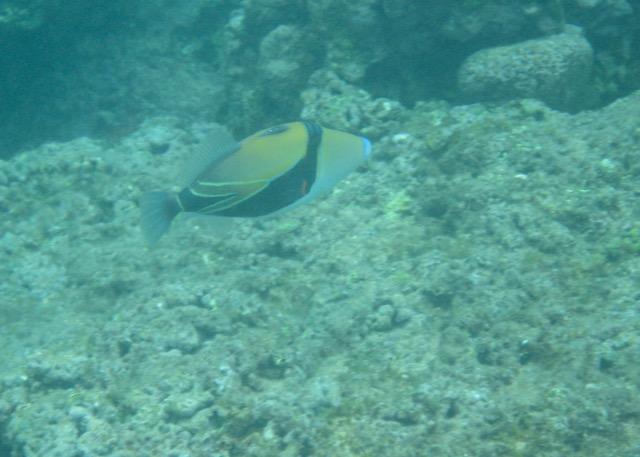Maui Snorkeling - 1.jpg