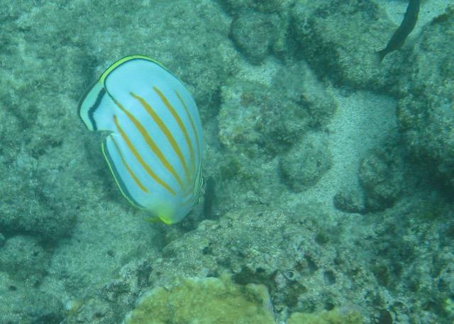 Maui Snorkeling - 2.jpg