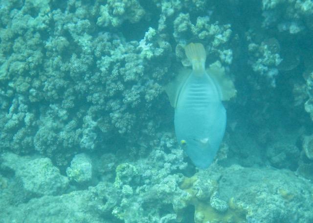 Maui Snorkeling - 4.jpg