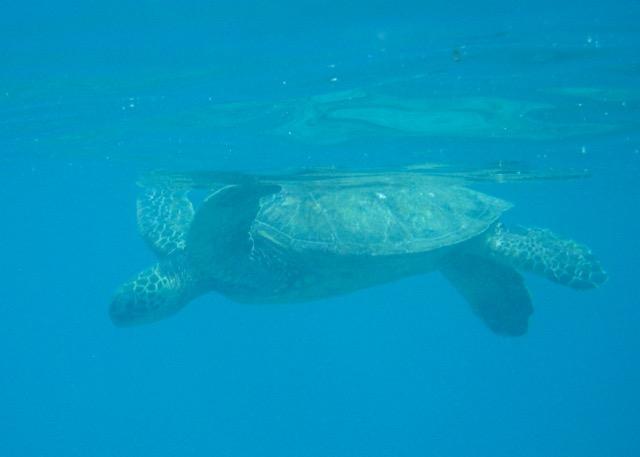 Maui Snorkeling - 6.jpg