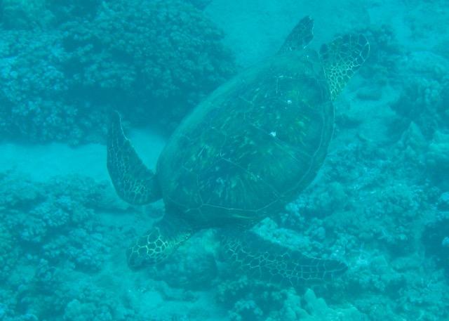 Maui Snorkeling - 7.jpg