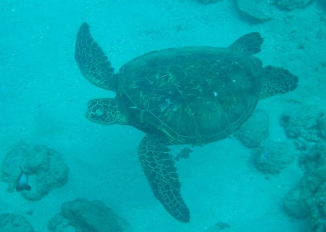 Maui Snorkeling - 8.jpg