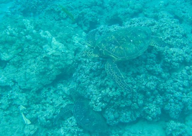 Maui Snorkeling - 9.jpg