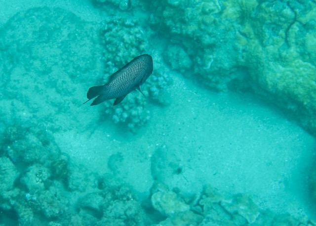 Maui Snorkeling - 10.jpg