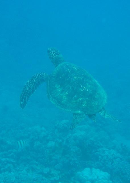 Maui Snorkeling - 11.jpg