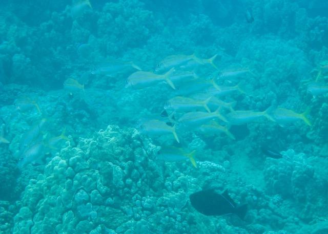 Maui Snorkeling - 12.jpg