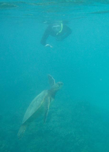 Maui Snorkeling - 13.jpg