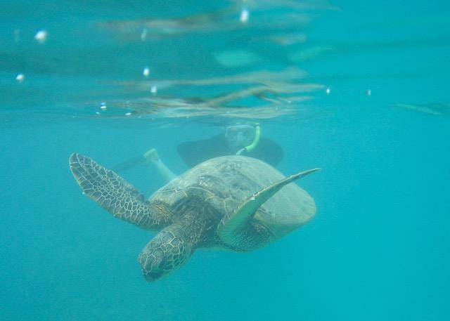Maui Snorkeling - 14.jpg