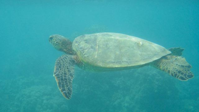 Maui Snorkeling - 15.jpg