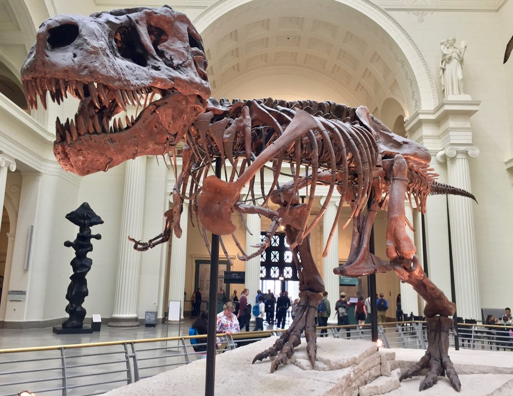 Meet Sue the T-Rex - the world's most complete T-Rex skeleton.