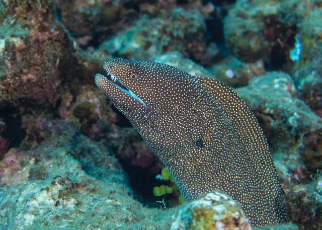A pretty big moray ell that we saw on the first dive.