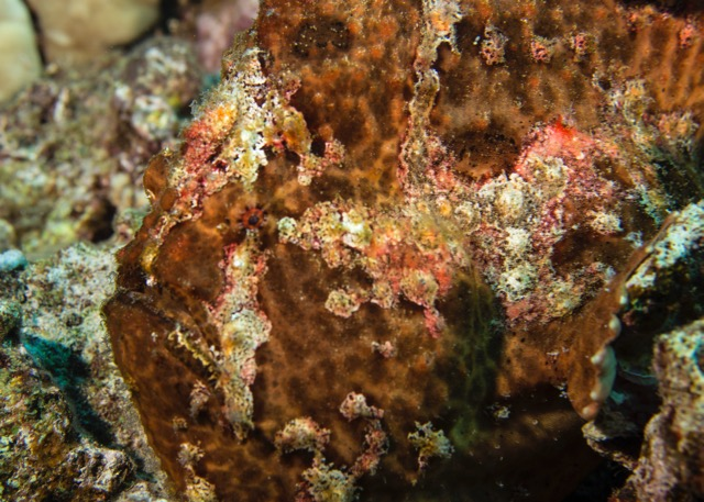 Scorpion fish - one of the cooler things we saw.