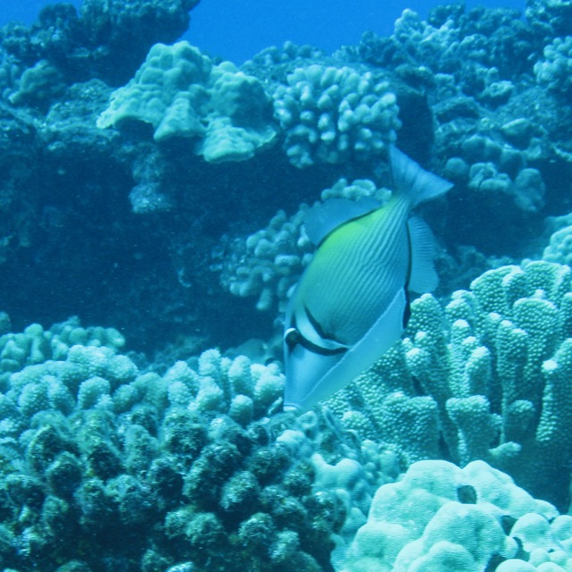 Maui Diving and Driving - 15.jpg