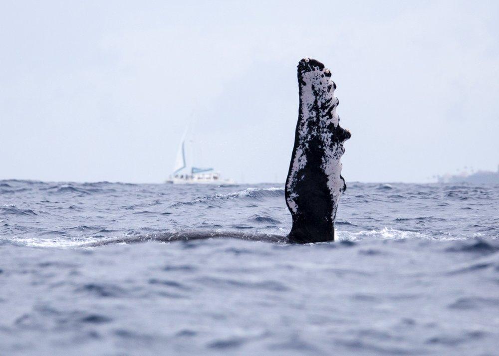 Whales - 6.jpg