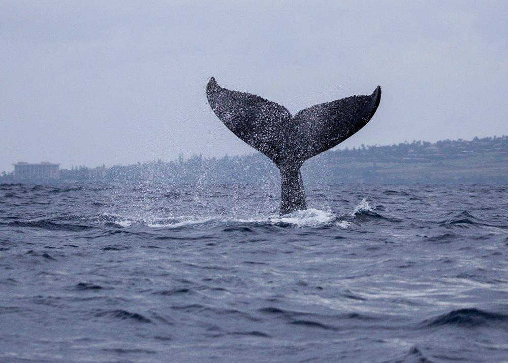 Whales - 7.jpg