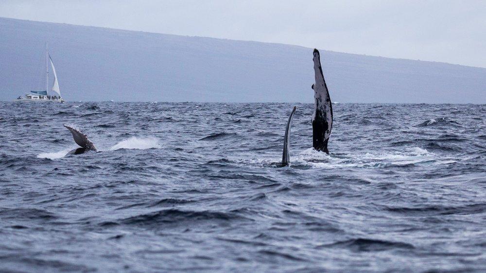 Whales - 9.jpg